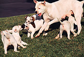 PUP 18 RK0020 04