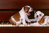 PUP 18 RK0023 02