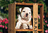 PUP 18 RK0025 05