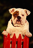 PUP 18 RK0029 01