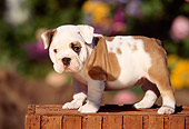 PUP 18 RK0036 03