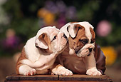 PUP 18 RK0039 04