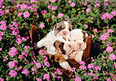 PUP 18 RK0041 01