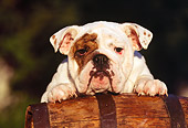 PUP 18 RK0047 35