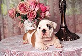 PUP 18 RK0048 07