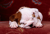 PUP 18 RK0051 02