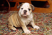 PUP 18 RK0067 06