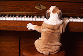 PUP 18 RK0075 01
