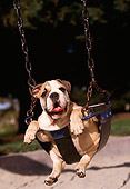 PUP 18 RK0096 01