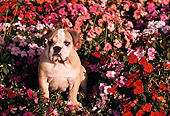PUP 18 RK0102 06