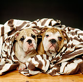 PUP 18 RK0103 07