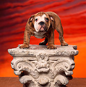 PUP 18 RK0110 07