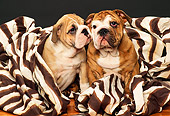 PUP 18 RK0120 04
