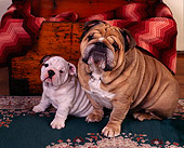 PUP 18 RK0126 02