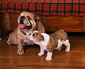 PUP 18 RK0128 05