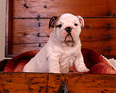 PUP 18 RK0133 06