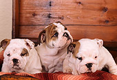 PUP 18 RK0137 02