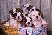 PUP 18 RK0138 34