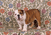 PUP 18 RK0141 03