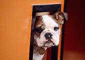 PUP 18 RK0188 10