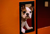 PUP 18 RK0189 02