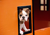 PUP 18 RK0189 03