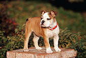 PUP 18 RK0196 01