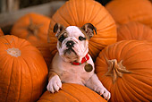 PUP 18 RK0205 05