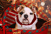 PUP 18 RK0207 01