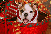 PUP 18 RK0207 06