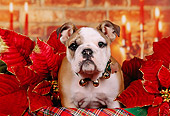 PUP 18 RK0209 01