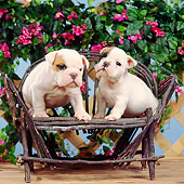 PUP 18 RS0032 04