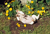 PUP 18 RS0077 02