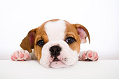 PUP 18 YT0001 01