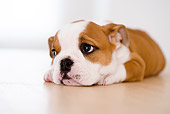 PUP 18 YT0005 01