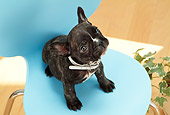 PUP 18 YT0011 01