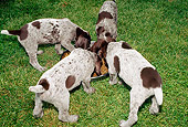 PUP 19 CE0002 01