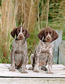 PUP 19 CE0009 01