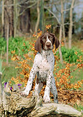 PUP 19 CE0012 01