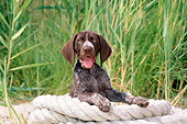 PUP 19 CE0013 01