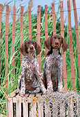 PUP 19 CE0014 01