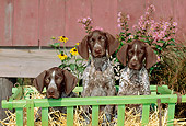 PUP 19 CE0015 01