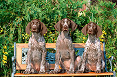 PUP 19 CE0016 01