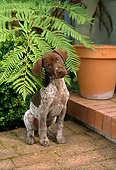 PUP 19 RC0002 01