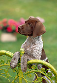 PUP 19 RC0004 01