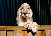 PUP 20 CB0001 01