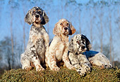 PUP 20 CB0004 01