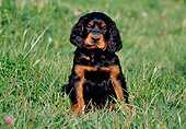 PUP 20 CB0006 01