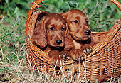 PUP 20 CB0008 01
