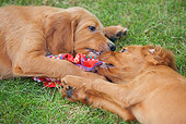 PUP 20 JE0011 01